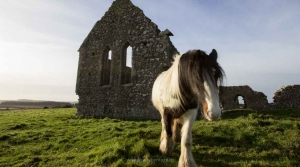 Explore our Heritage Trails to Discover Tipperary's Hidden Treasures with our Derrynaflan Trail Audio Guide