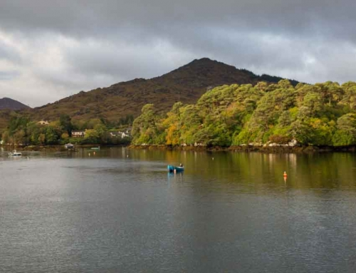 Explore Stunning West Cork with the Ellen Hutchins Trail