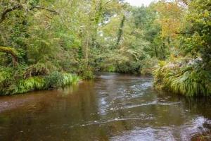 Glengarriff Forest Park Ellen Hutchins Trail