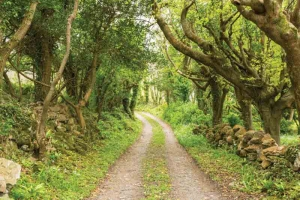 The atmospheric path to Gleninagh Castle on the Wild Atlantic Way of County Clare