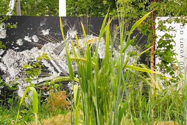An image of the UCD Showgarden at Bloom - A History of the Irish Diet in Plants